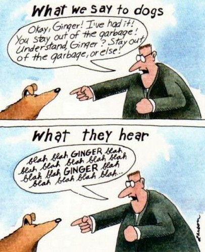 what_Dogs_Hear